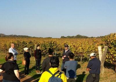 Tour of Cullen Wines. Photo: Nick van holst Pellekaan