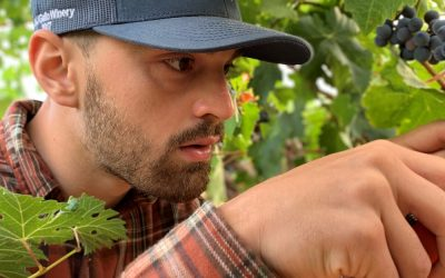 Californian Internship Doubles the Wine Research Opportunity for PhD Student Pietro Previtali
